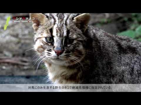 対馬観光映像集~自然編~ (MOTTO! TSUSHIMA NATURE)