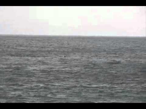 2012年6月27日(水) 阿連(あれ)沖のイルカ