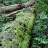 縄文の森・龍良山(たてらやま)と阿連の洞門について