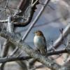 対馬野鳥図鑑ブログ