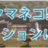 対馬野生生物保護センター Tsushima Wildlife Conservation Center