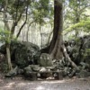 Ghost of Tsushima(ゴーストオブツシマ)と対馬の神社について | エヌの世界ブログ