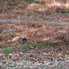バードソン大会結果報告! | 対馬野鳥図鑑ブログ